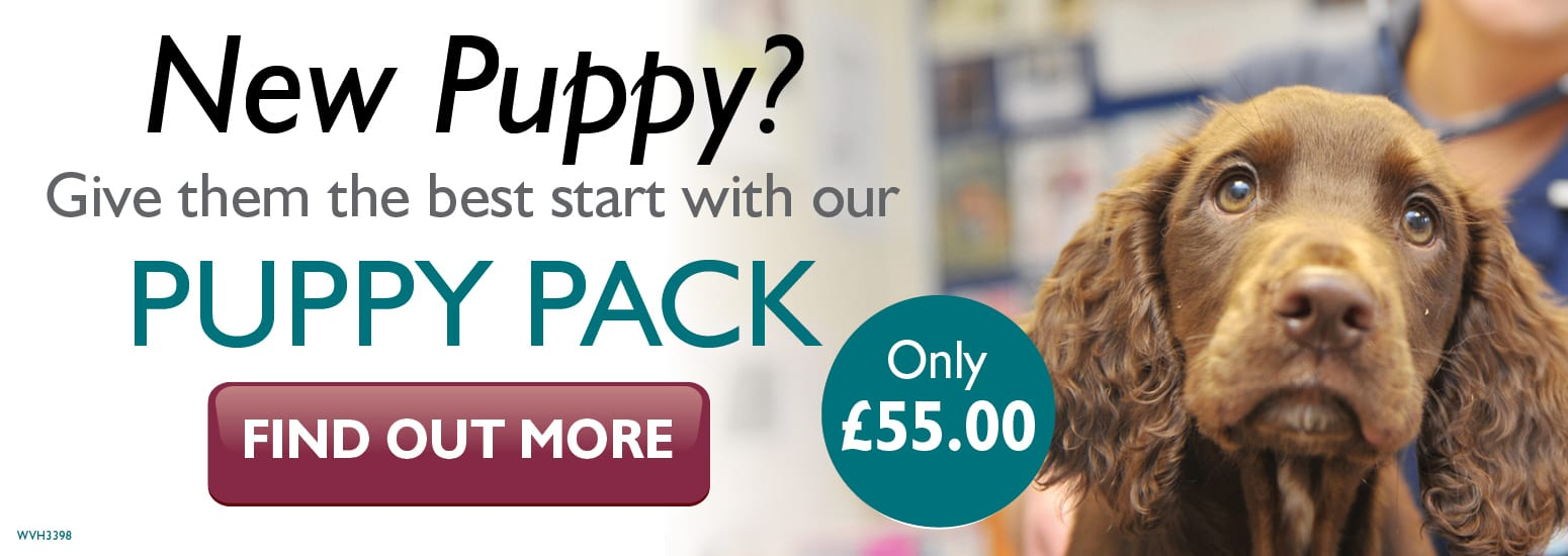 Puppy Pack covering puppy injections, flea & worm treatment, and much more for only £55 at vets in Runcorn