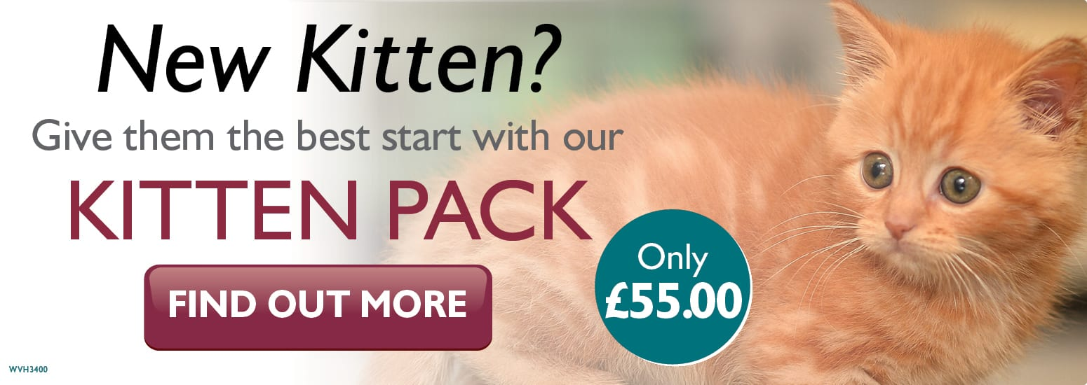 Kitten Pack covering kitten injections, flea & worm treatment, and much more for only £55 at vets in Runcorn